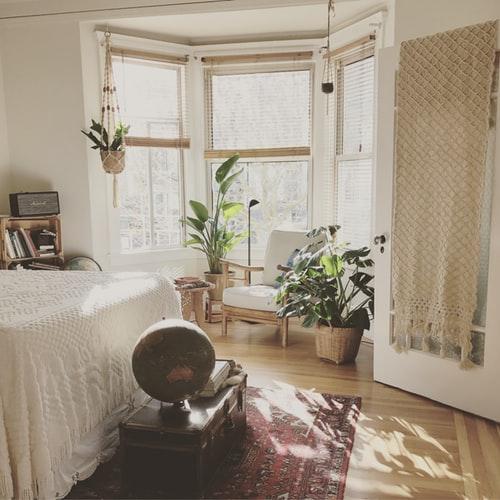 plantas interiores